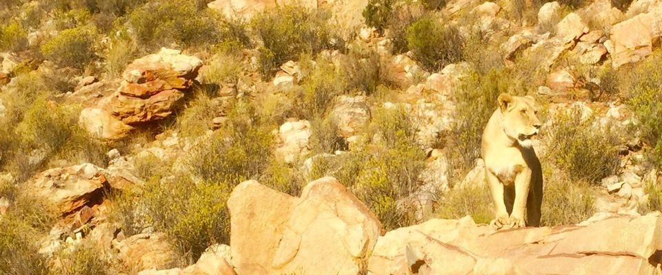 Golf Trainingsreise - Südafrika/Kapstadt & Garden Route 2020 - Matthias Rollwa - Golfreise